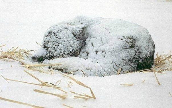 Херсонский школьник спас вмерзшего в лед щенка