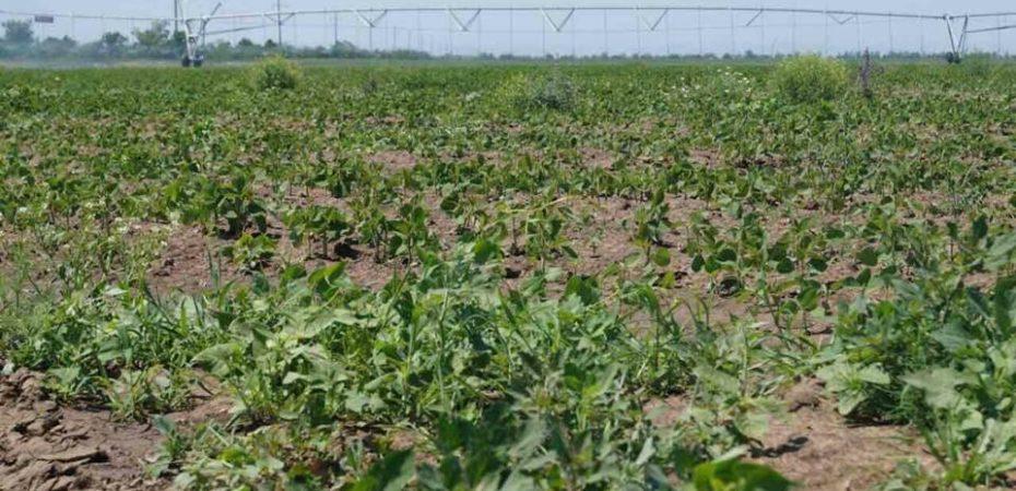 На Херсонщині додатково зрошуватимуть тисячу гектарів землі