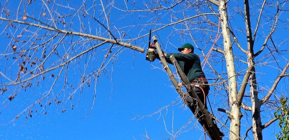 Херсонські чиновники заробляють на обрізанні і видаленні дерев