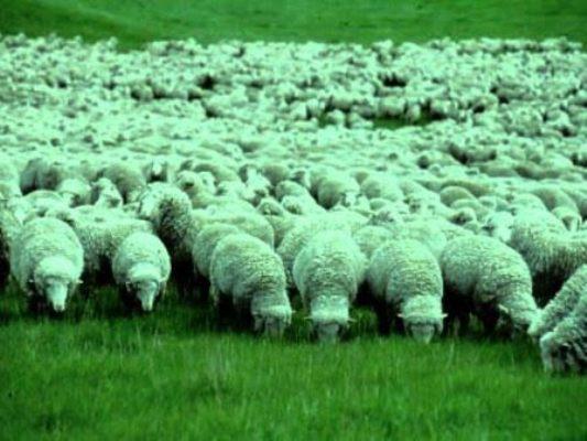 Аудитори Херсонщини запропонували низку пропозицій для розвитку вівчарства у державі