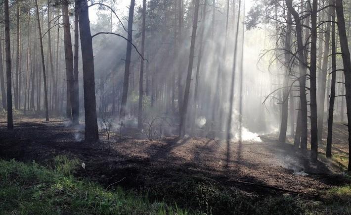 Пожежу ліквідовано