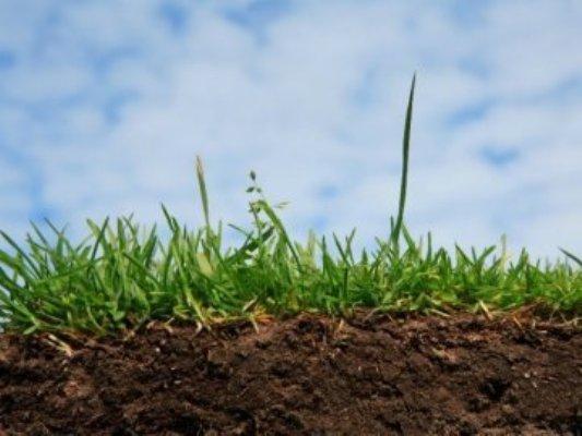 У червні на Херсонщині з торгів продали права оренди на 207,6 гектарів землі