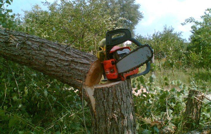 Держекоінспекція попереджає незаконне знищення зелених насаджень