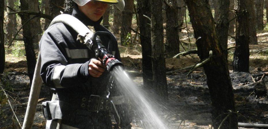 Триває ліквідація пожежі на території Кардашинського лісництва