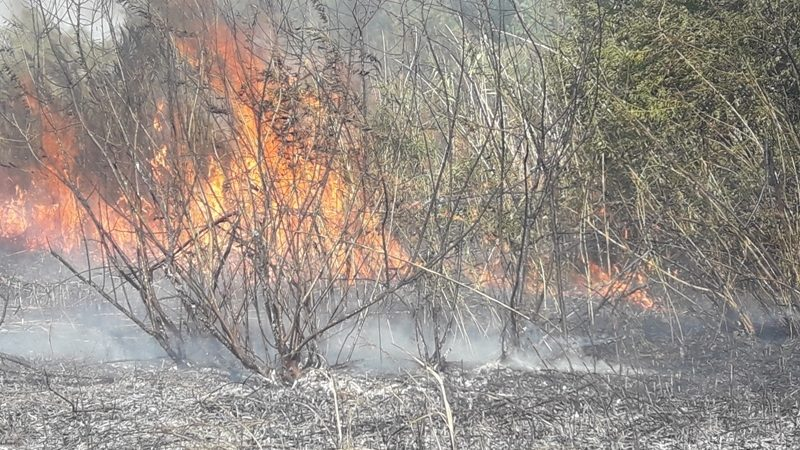Новокаховські пожежні тричі гасили займання сухостою