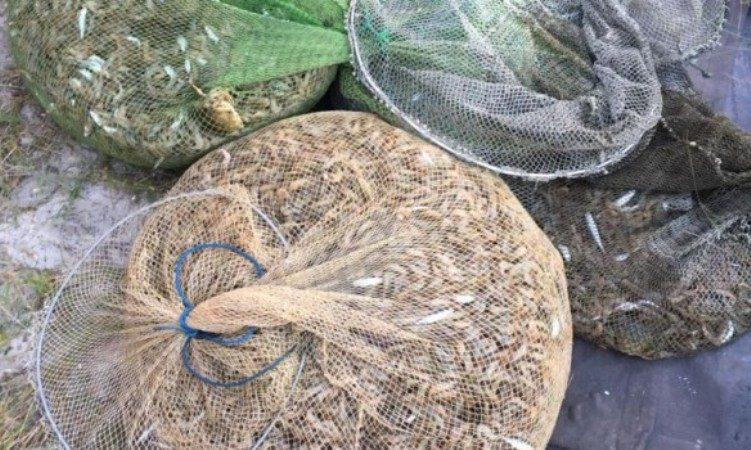 Неподалік від Каланчака прикордонники виявили браконьєра з уловом на 25 тисяч гривень