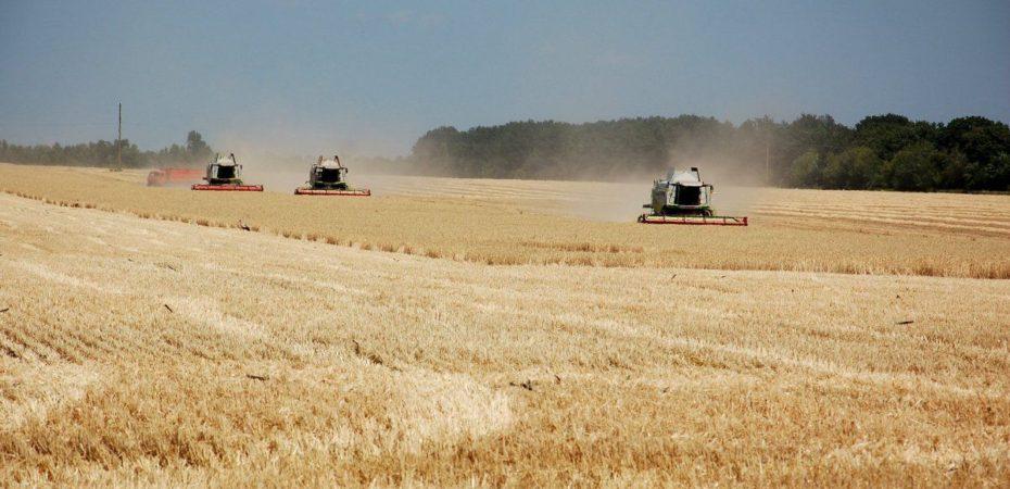 Збір урожаю сільськогосподарських культур в Херсонській області триває