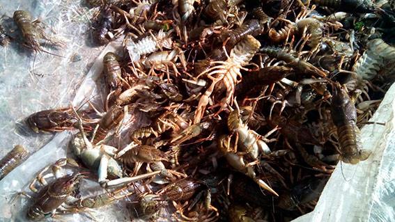 На Херсонщині поліцейські затримали браконьєра, який займався незаконним виловом раків (ФОТО)