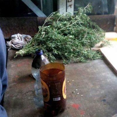 """На Херсонщині поліцейські у жителя Каховки вилучили 7 кг """"канабісу"""""""
