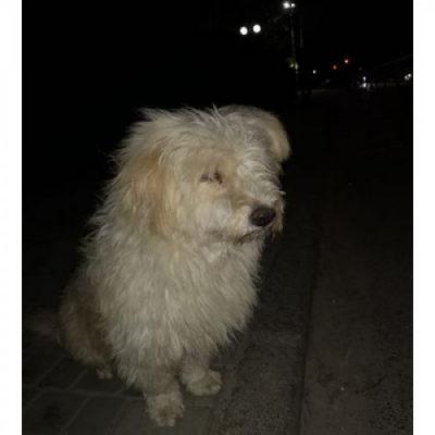 Херсонский пес-Хатико кого-то ждет на автобусной остановке